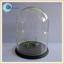 clear glass bell jar with wooden base, glass dome with base
