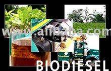 Biodiesel Biofuel