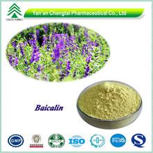 High quality hot sale powder 100% Natural Radix scutellaria extract
