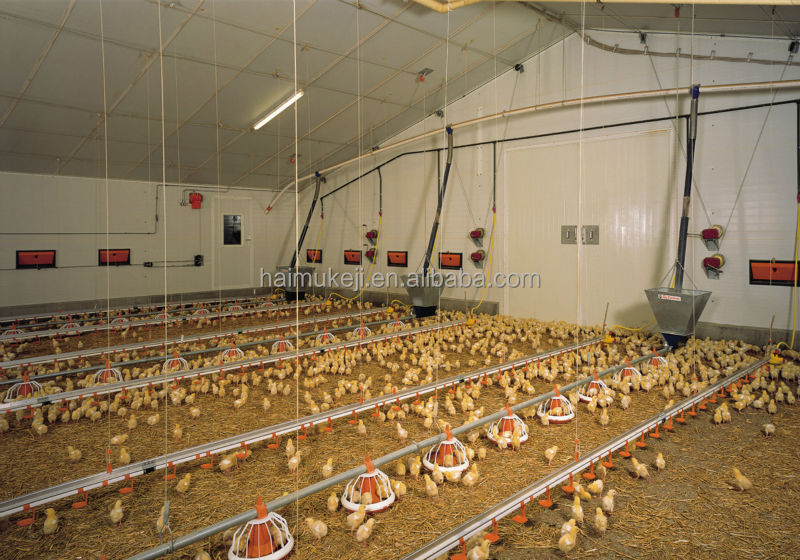 how to start a chicken breeding farm