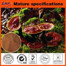 Ganoderma lucidum Extract Powder/Reishi Mushroom Extract Polysaccharide &Triterpene