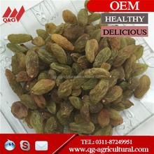 Best Quality Fruit Products Dried golden raisins