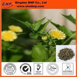 2014 New Dahurian Patrinia Extract,Dahurian Patrinia Extract Powder,Dahurian Patrinia P.E