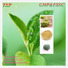 GMP manufacturer natural Green Tea Extract Polyphenols