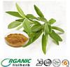 Wholesale Salvia japonica Thunb. leaf/salvia officinalis/Sage Leaf P.E. extract powder