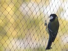Miglior prezzo uccelli da voliera, di alta qualità uccello gabbia