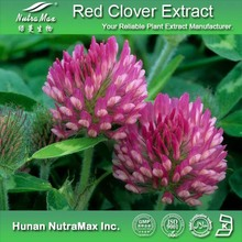 100% Natural Red Clover P.E./Red Clover Herb Extract/Red Clover Powder