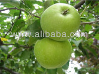 Granny Smith Apple - Organic Green Apple