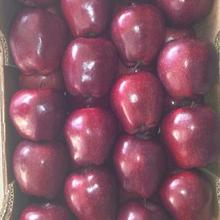 The Best Quality Of Red Delicious apple