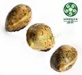 nova safra de sementes de cânhamo em bruto de venda