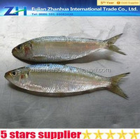 [ Sardine fish ] Frozen goods on sale for market for canned for home cooking restaurant and Thailand Cuisine