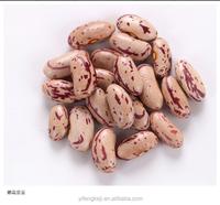 Light Speckled Kidney Beans, Yi'an origin