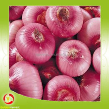 Red Onio/mesh onion bags /best Fresh Onion supplier in CHINA