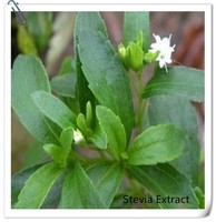 organic stevia leaf extract