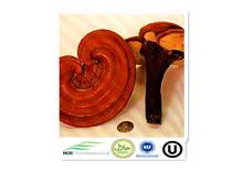 Ganoderma Ling Zhi:Mushroom Extract