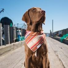 Special Custom Dog Bandana with more than 100 fabric desgin
