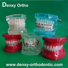 Dental orthodontic study model Plastic Teeth Model