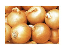 yellow onion good price 2015 new fresh yellow onion