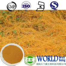 dodder seed extract Cuscuta chinensis Lam extract 10:1 dodder extract powder