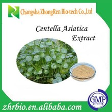 100% Pure Natural GMP Ceitification Centella Asiatica Extract 90%