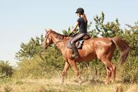 popular design matt finish with high quality horse riding helmets