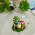 zakka totoro de comestibles de resina micro plantas suculentas y paisaje de vidrio d0824 bonsai