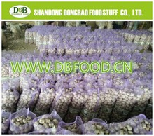2014 new crop Fresh Garlic Pure white and normal white garlic from factory