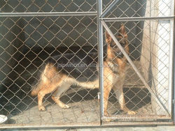 Hot dipped galvanized steel cheap chain link dog kennels