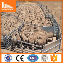 1000 Head Sheep Yard Systems - Semi Permanent Stud Manager Sheep Yards