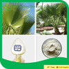 Plant extract saw palmetto fruit extract/Sabal Fruit Extract