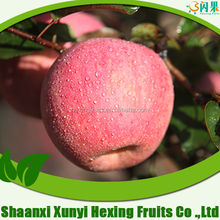 Xunyi New Red Fresh Fuji Apple Fruit