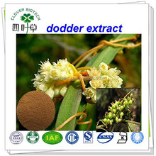 Dodder Seed Extract/semen cuscutae extract