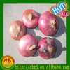 Delicious Fresh Shallot Onion Red Onion