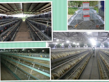 Shandong factory supplys poultry farm house design