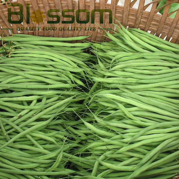 Top quality frozen green bean new crop asian vegetable market prices