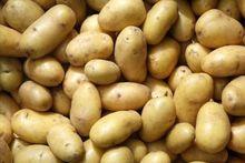 Indonesian Fresh Potato