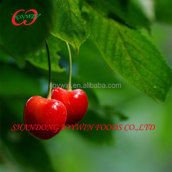2014 distributor crispy fresh fruits rich proteins fruit cherry from china