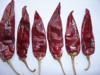 American Red Chili red chili red hot chili