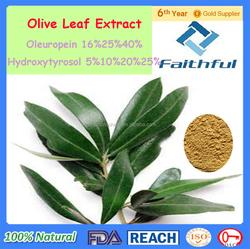 Hydroxytyrosol Manufacturers/Botanical extract/Fda Gmp Iso9001 Organic Olive Leaf Extract
