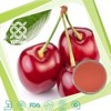 100% Natural Acerola Cherry Fruit Extract Powder