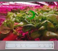Jiangjing 1200mm Hydroponics Lettuce plant lighting / Strips Led Grow Light