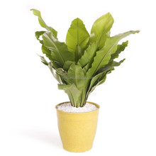 Simple biodegradable colorful indoor flower pot
