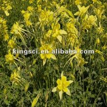 Cat's claw extract, Ranunculus ternatus Thunb extract powder