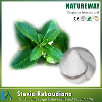 stevia dry leaves extract