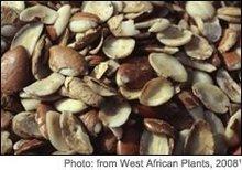 Irvingia Gabonensis seeds (African Mango)