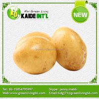 2015 hot sale high quality fresh potato
