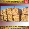 Russia White Birch lumber wood