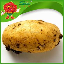 2015 Hotsale fresh Potatoes