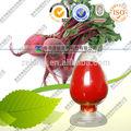 seca de remolacha roja en polvo de la raíz natural color pigmento natural