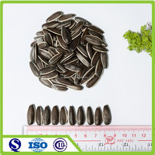 China high quality Wholesale sunflower seeds price